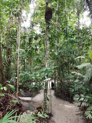 MUSA e INPA- Combo Museus Ecológicos
